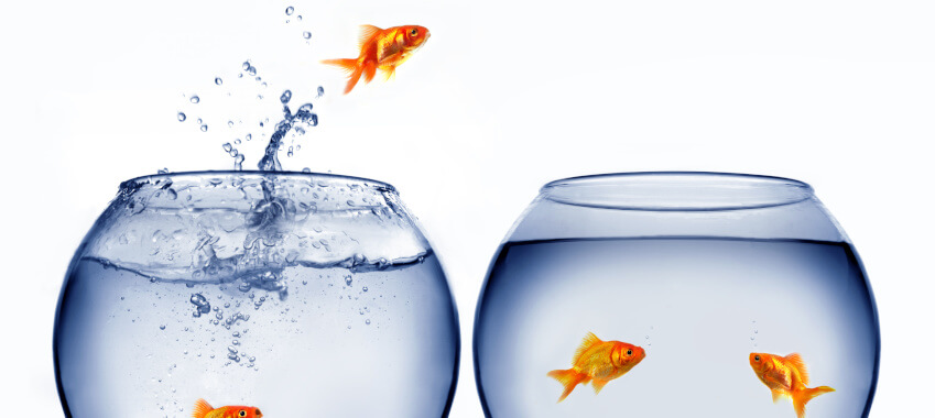 goldfish jumping fishbowl