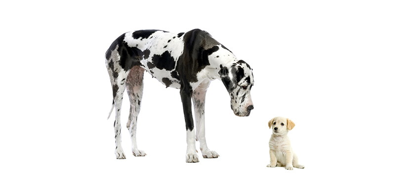 Small and large dogs